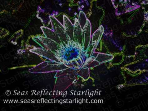 Dazzling Glow Lotus by Seas Reflecting Starlight.