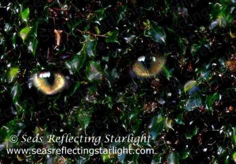 Glimmering Eyes in Glade by Seas Reflecting Starlight
