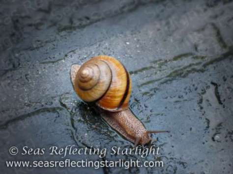 Weekly Photo Challenge: Forward - Spirited Snail on a Rainy Day