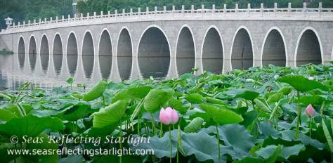 Lotus Pond Reflecting Bridge Arches by Seas Reflecting Starlight