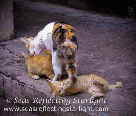 Mama Cat's Bath Time Helper by Seas Reflecting Starlight