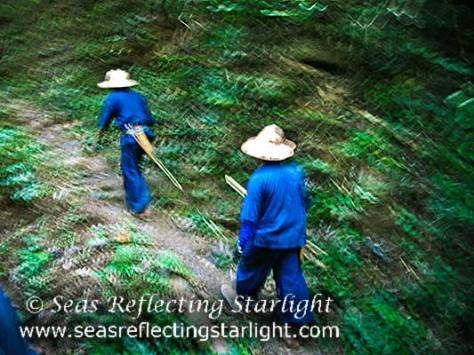 Trekking Through the Thai Jungle by Seas Reflecting Starlight