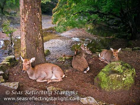 Nara Forest Dwellers' Retreat by Seas Reflecting Starlight